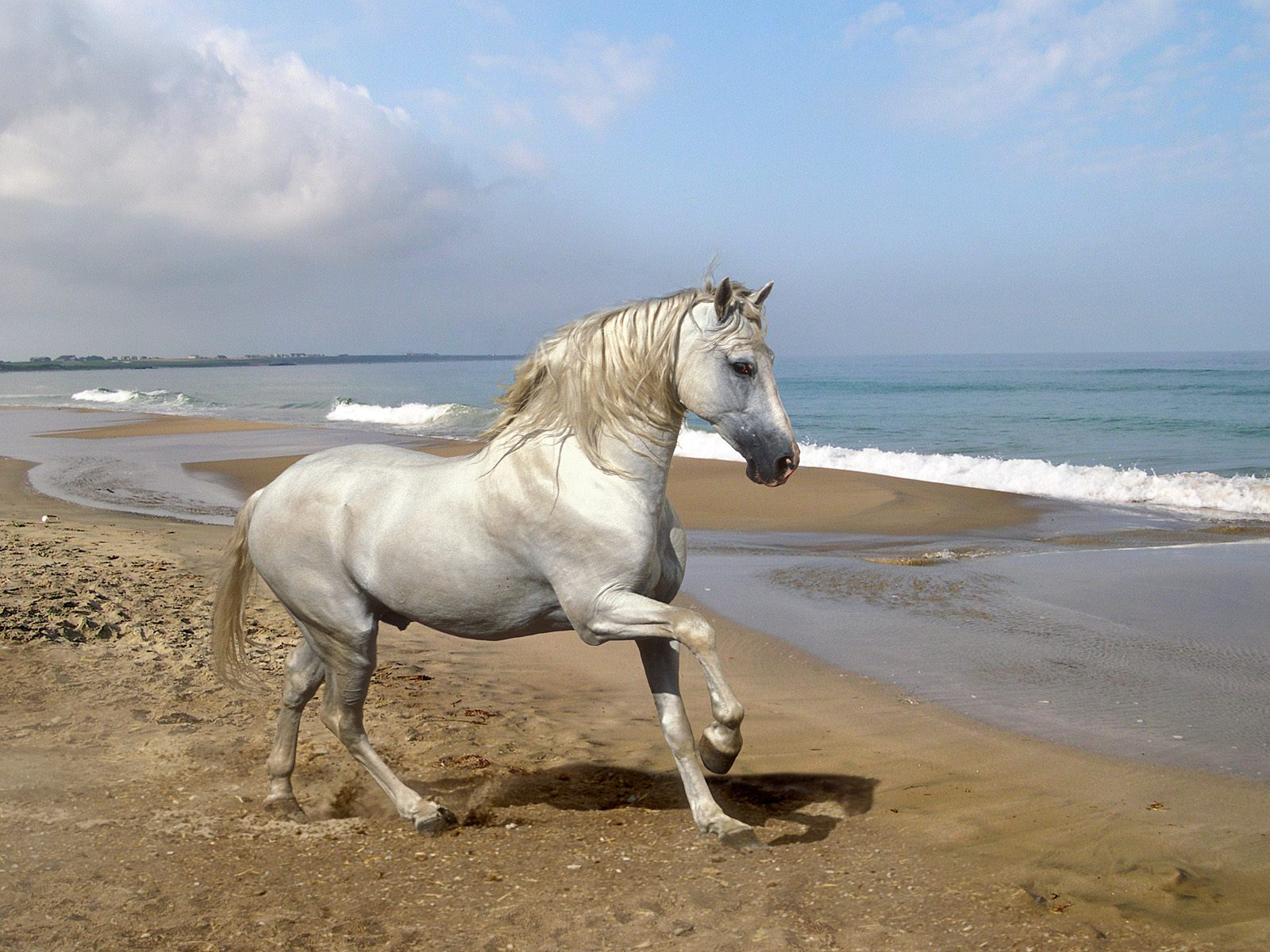 Best Wallpaper Horse Beach - white-horse-on-beach  You Should Have_696411.jpg